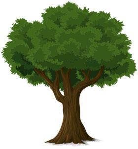 Arbre au tronc brun et aux feuilles vertes - Pixabay