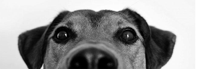 Médor, le chien qui cherche le web