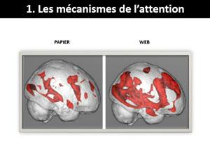 Le web génère la surcharge cognitive - Rédaction et neurosciences