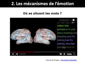Le cerveau classe les mots - Rédaction et neurosciences