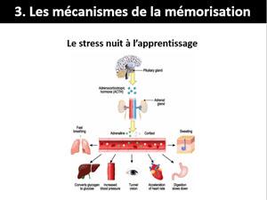 Le stress nuit à l'apprentissage - Rédaction et neurosciences